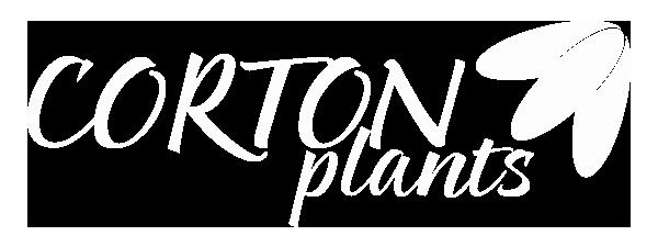 Corton Plants